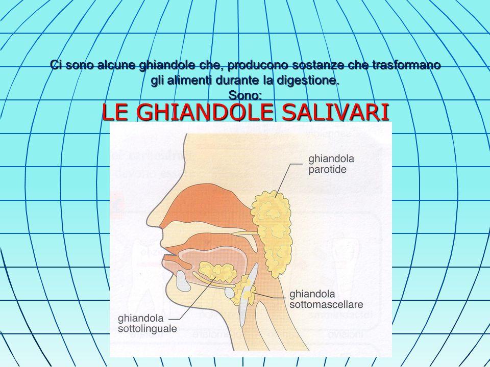 Ci sono alcune ghiandole che, producono sostanze che trasformano gli alimenti durante la digestione.