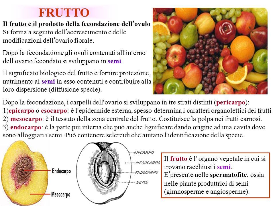 Criteri per distinguere i diversi frutti: Da un punto di vista strettamente botanico si possono distinguere: Frutti veri: derivano dall accrescimento e dalla trasformazione del solo ovario.