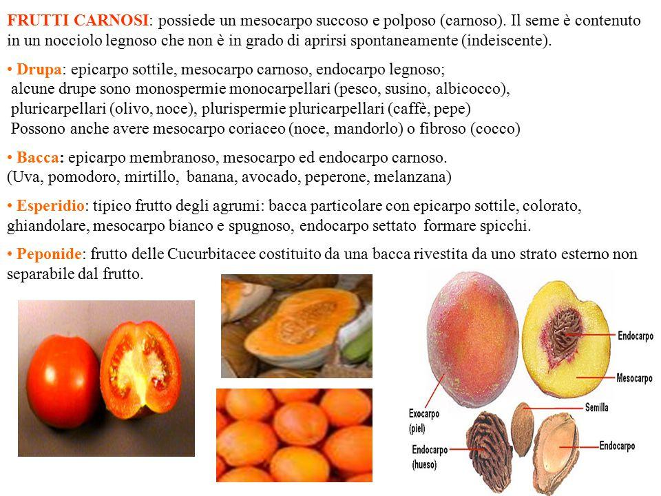 Frutti carnosi Drupa BaccaEsperidio Peponide (cetriolo,anguria, zucca) Pomo: falso fruttoFrutto composto.