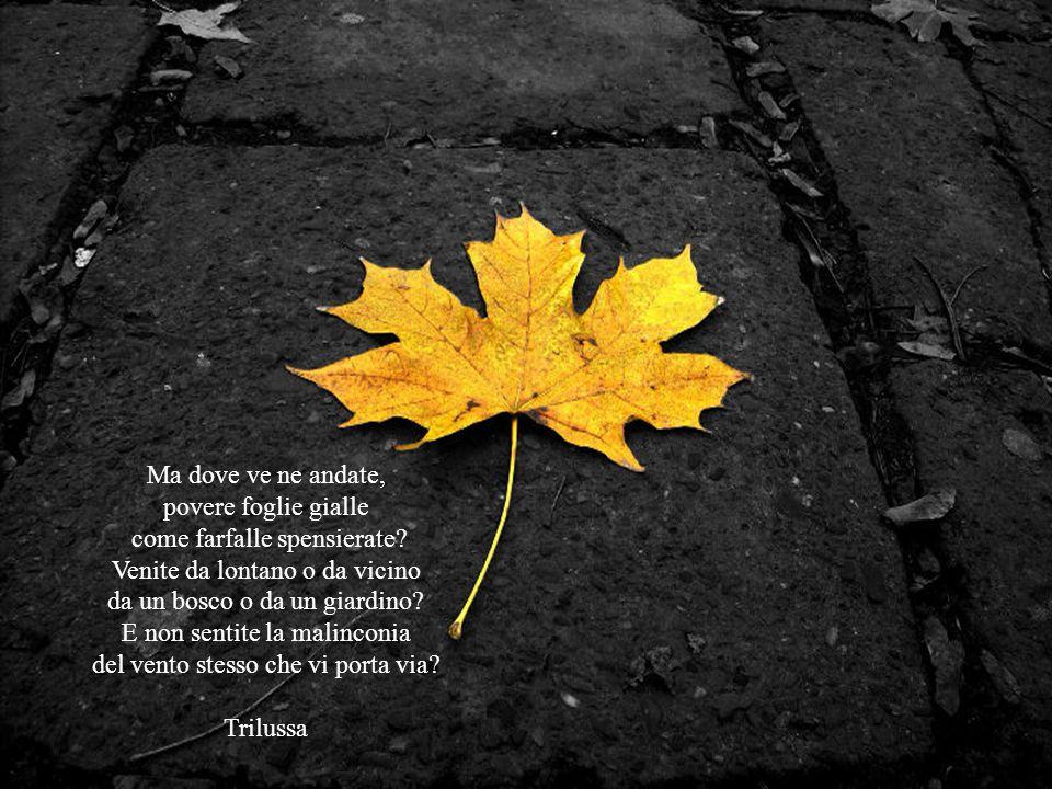 La terra si veste del giallo delle foglie in autunno il vento raccoglie i sussurri dei trepidi uccelli e gioca con in i rami avvizziti che additano il