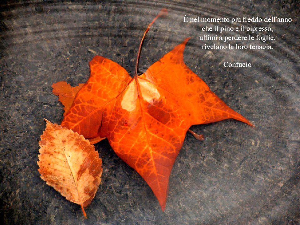 Cadono le foglie. Come vengono giù dolcemente! nel loro breve viaggio dal ramo alla terra Pare che vogliano creare un'ultimo attimo di bellezza. E, pu