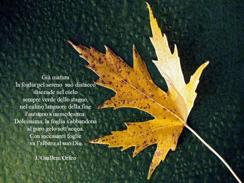 Già matura la foglia pel sereno suo distacco discende nel cielo sempre verde dello stagno, nel calmo languore della fine l'autunno s'immedesima.