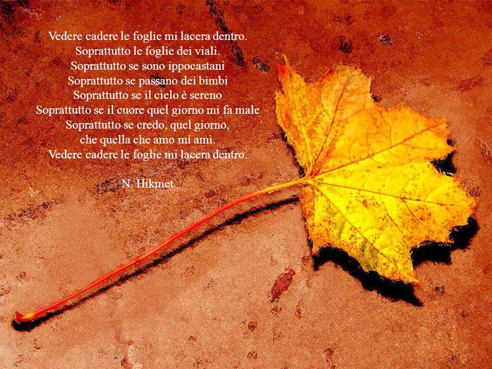 Vedere cadere le foglie mi lacera dentro.Soprattutto le foglie dei viali.