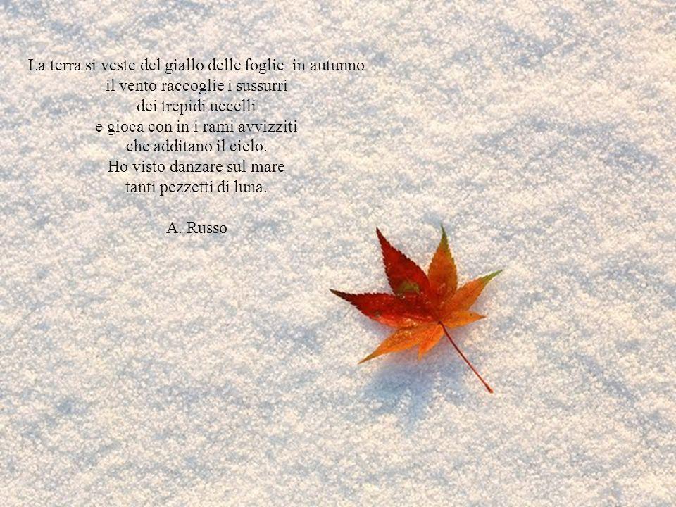 La terra si veste del giallo delle foglie in autunno il vento raccoglie i sussurri dei trepidi uccelli e gioca con in i rami avvizziti che additano il cielo.