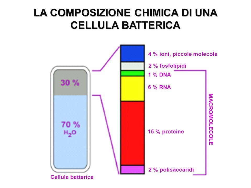 LA COMPOSIZIONE CHIMICA DI UNA CELLULA BATTERICA 4 % ioni, piccole molecole 2 % fosfolipidi 1 % DNA 6 % RNA 15 % proteine MACROMOLECOLE 2 % polisaccar