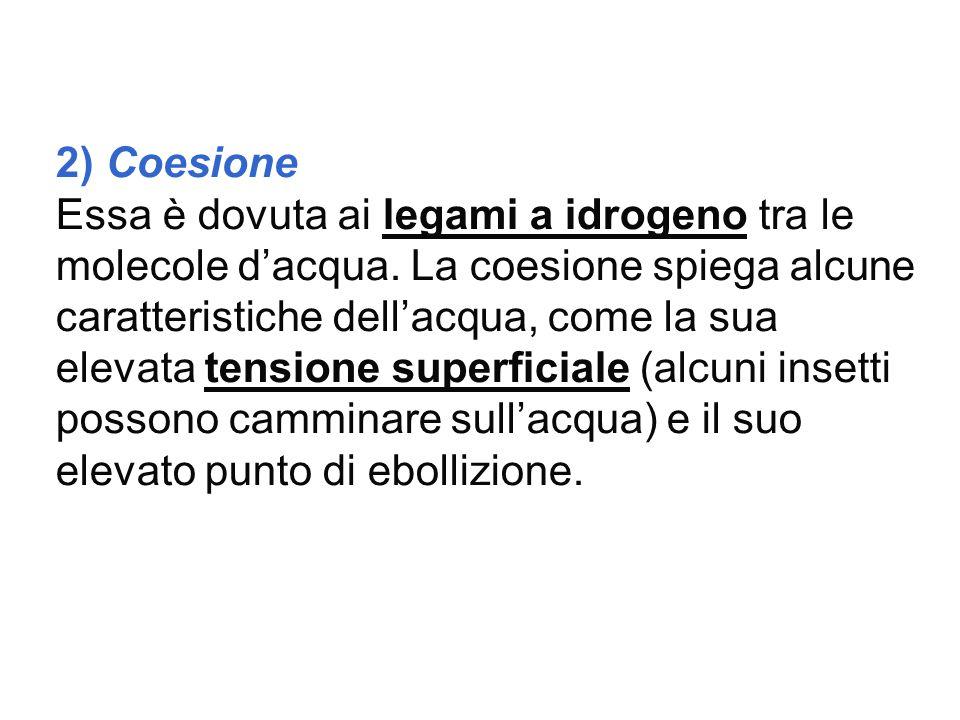 2) Coesione Essa è dovuta ai legami a idrogeno tra le molecole d'acqua. La coesione spiega alcune caratteristiche dell'acqua, come la sua elevata tens