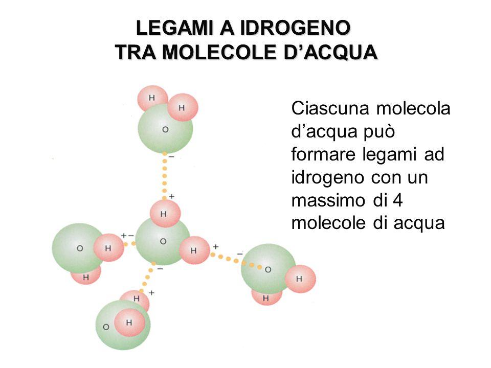 LEGAMI A IDROGENO TRA MOLECOLE D'ACQUA TRA MOLECOLE D'ACQUA Ciascuna molecola d'acqua può formare legami ad idrogeno con un massimo di 4 molecole di a
