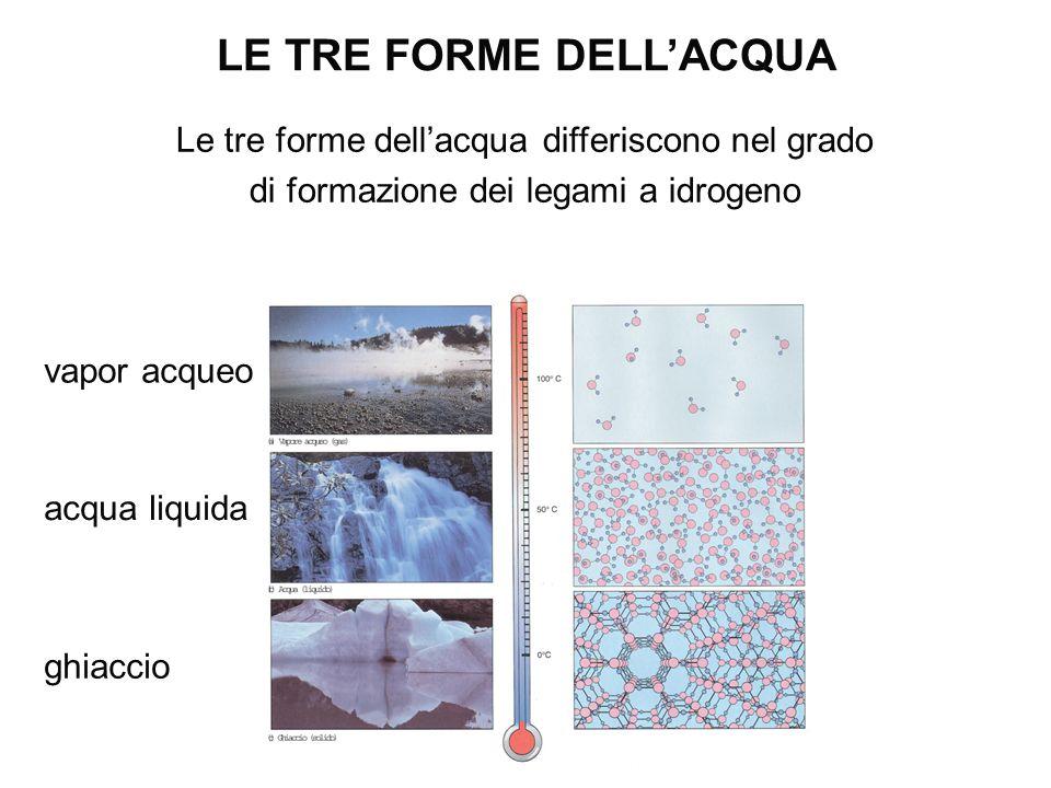 Le tre forme dell'acqua differiscono nel grado di formazione dei legami a idrogeno LE TRE FORME DELL'ACQUA ghiaccio acqua liquida vapor acqueo