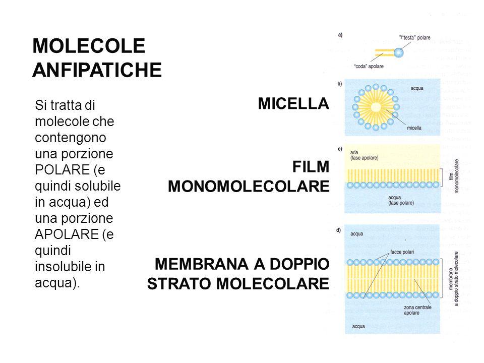 MOLECOLE ANFIPATICHE Si tratta di molecole che contengono una porzione POLARE (e quindi solubile in acqua) ed una porzione APOLARE (e quindi insolubil