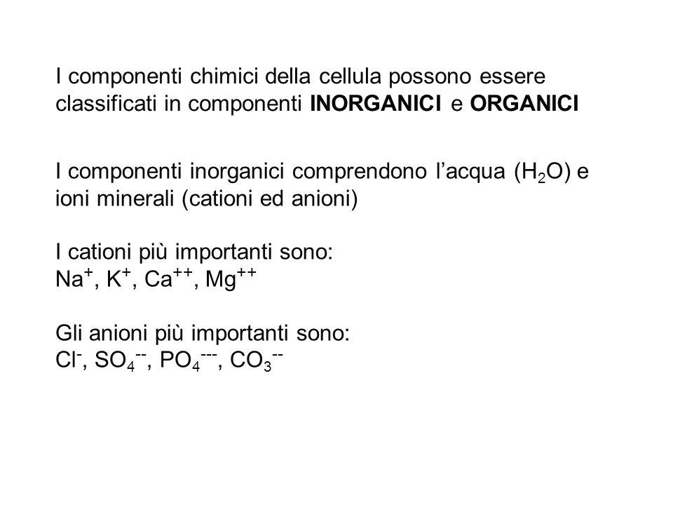I componenti chimici della cellula possono essere classificati in componenti INORGANICI e ORGANICI I componenti inorganici comprendono l'acqua (H 2 O)