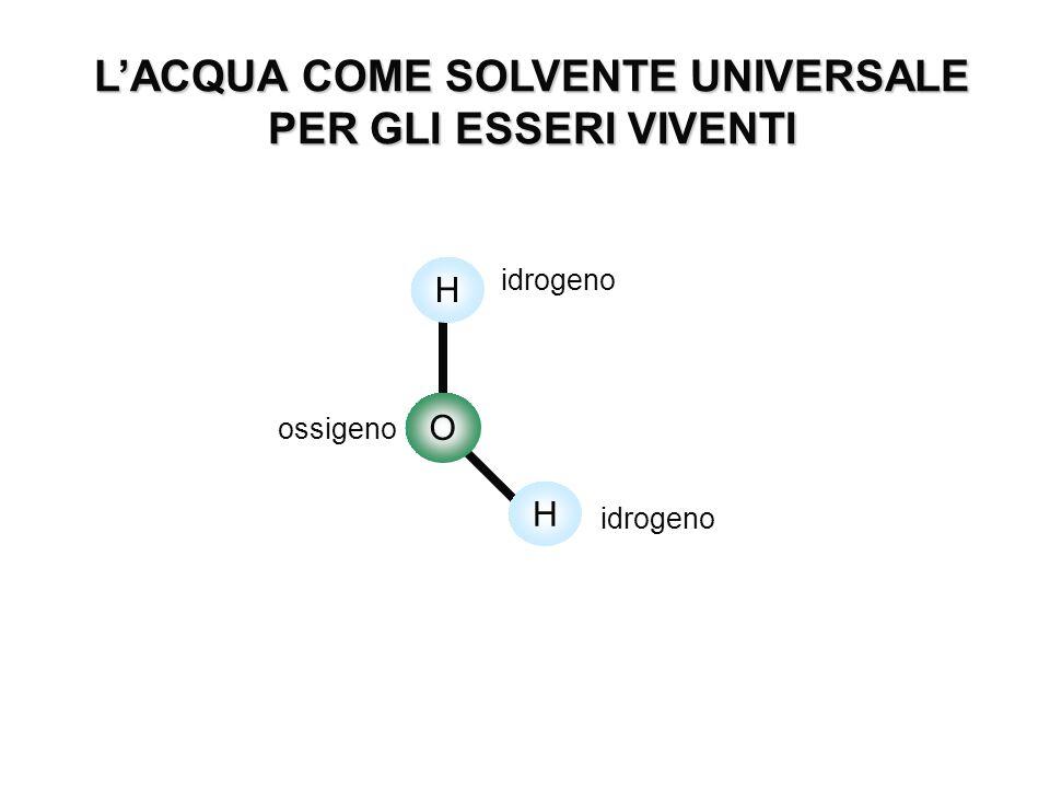 L'ACQUA COME SOLVENTE UNIVERSALE PER GLI ESSERI VIVENTI O H H ossigeno idrogeno