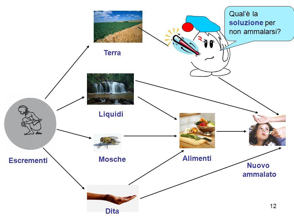 12 Escrementi Terra Liquidi Dita Mosche Nuovo ammalato Alimenti Qual'è la soluzione per non ammalarsi?