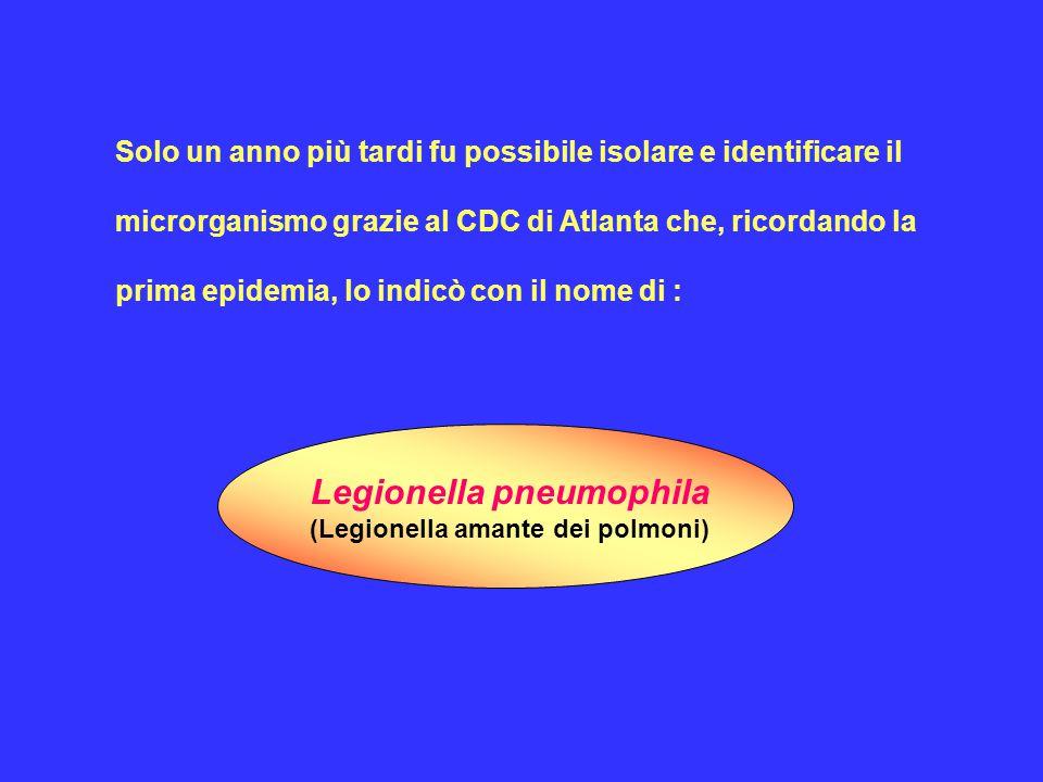I sierogruppi 1, 4 e 6 sono frequentemente implicati nelle infezioni umane.