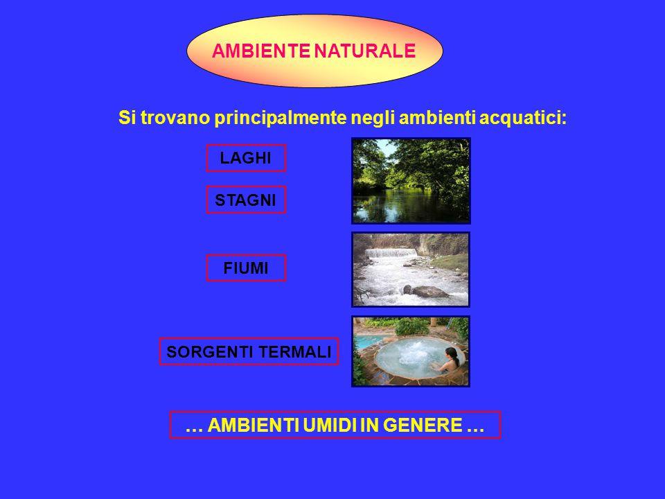 SERBATOI ARTIFICIALI Dalle sorgenti naturali, legionella può colonizzare gli ambienti idrici artificiali: RETI CITTADINE DISTRIBUZIONE ACQUA POTABILE IMPIANTI IDRICI SINGOLI EDIFICI IMPIANTI CLIMATIZZAZIONE PISCINEFONTANE APPARECCHIATURE TERAPIE RESPIRATORIE VASCHE A GETTO D'ACQUA