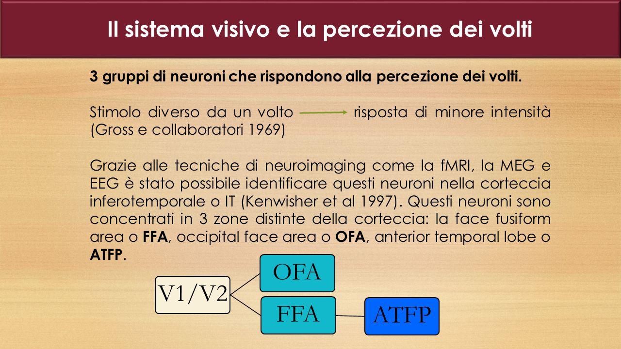 3 gruppi di neuroni che rispondono alla percezione dei volti.