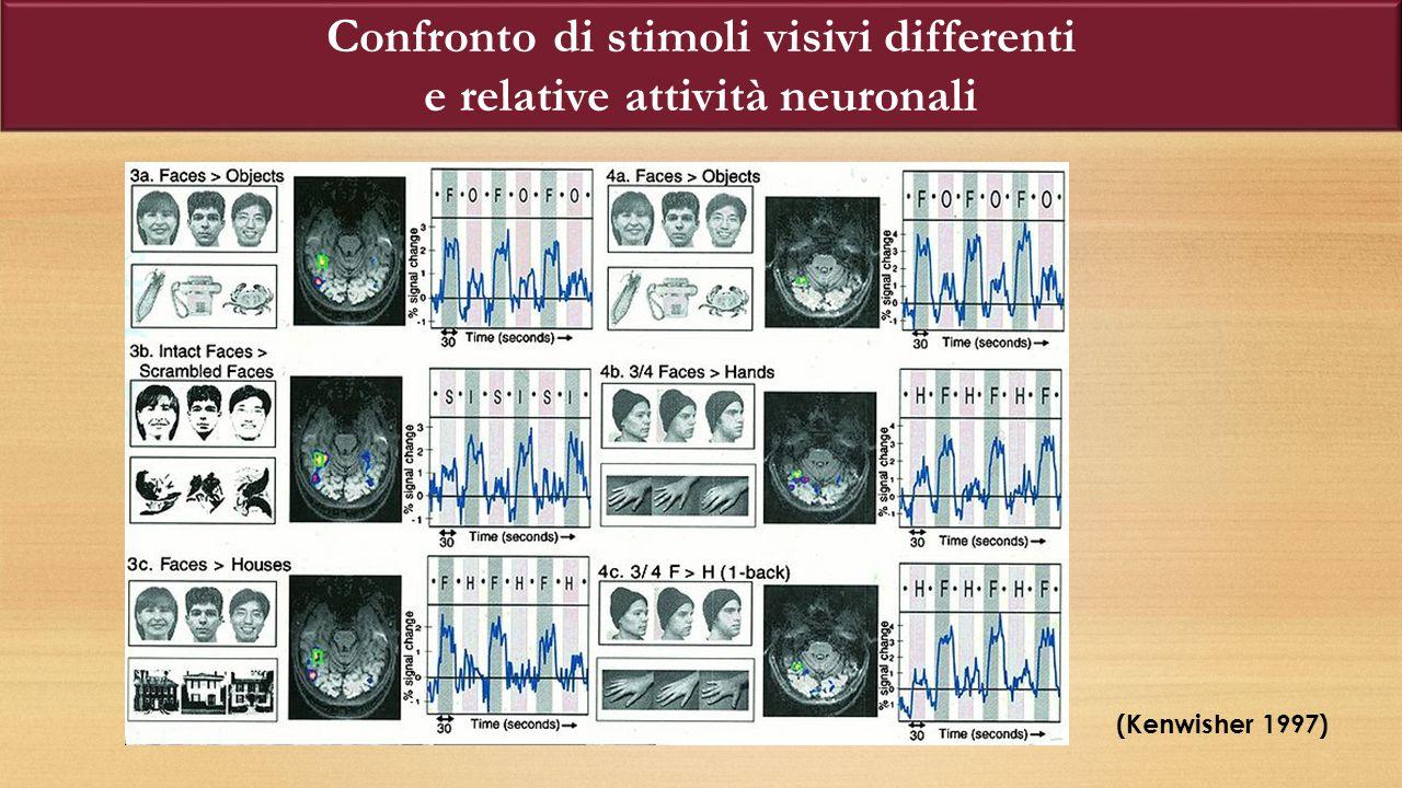 Confronto di stimoli visivi differenti e relative attività neuronali (Kenwisher 1997)