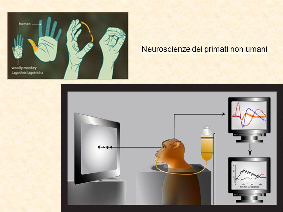 Neuroscienze dei primati non umani