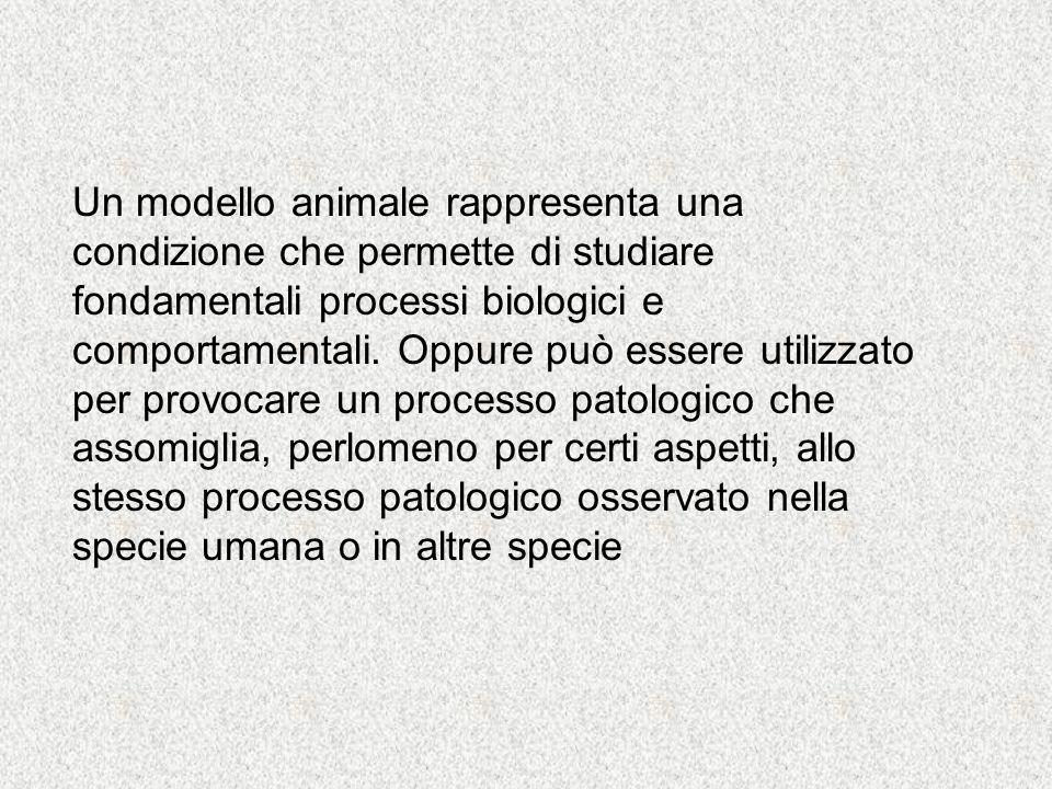 Un modello animale rappresenta una condizione che permette di studiare fondamentali processi biologici e comportamentali.