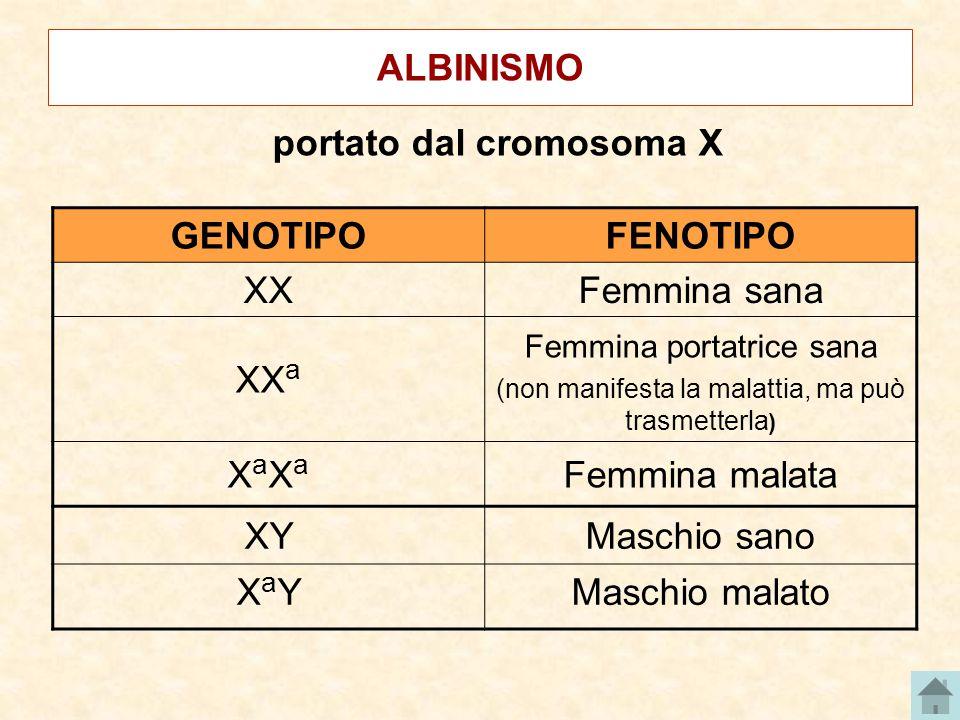 ALBINISMO portato dal cromosoma X GENOTIPOFENOTIPO XXFemmina sana XX a Femmina portatrice sana (non manifesta la malattia, ma può trasmetterla ) XaXaX