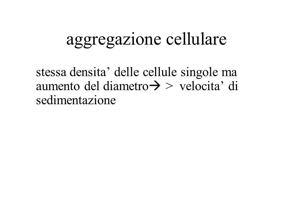 aggregazione cellulare stessa densita' delle cellule singole ma aumento del diametro  > velocita' di sedimentazione