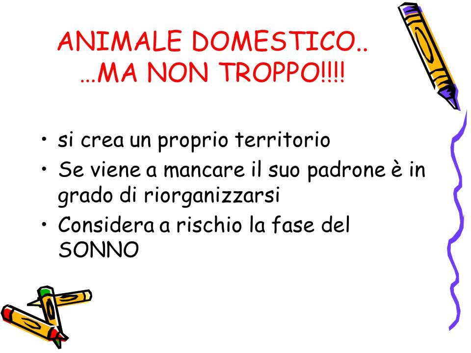 ANIMALE DOMESTICO..…MA NON TROPPO!!!.