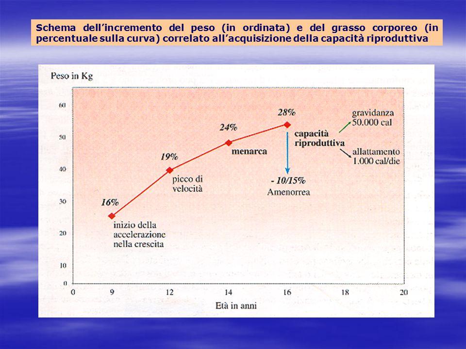 Schema dell'incremento del peso (in ordinata) e del grasso corporeo (in percentuale sulla curva) correlato all'acquisizione della capacità riproduttiv