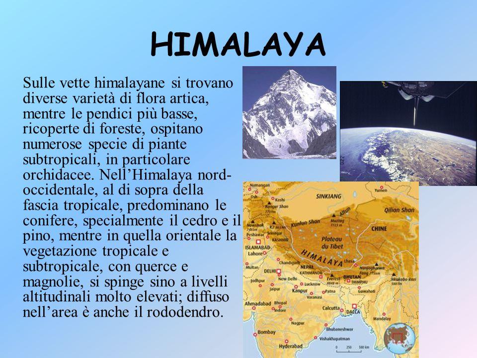 PIANURA INDO-GANGETICA A piedi dell'Himalaya è situata la piana indo-gangetica, la più estesa pianura alluvionale della Terra, formata dai depositi dei fiumi Indo, Gange e Brahmaputra.