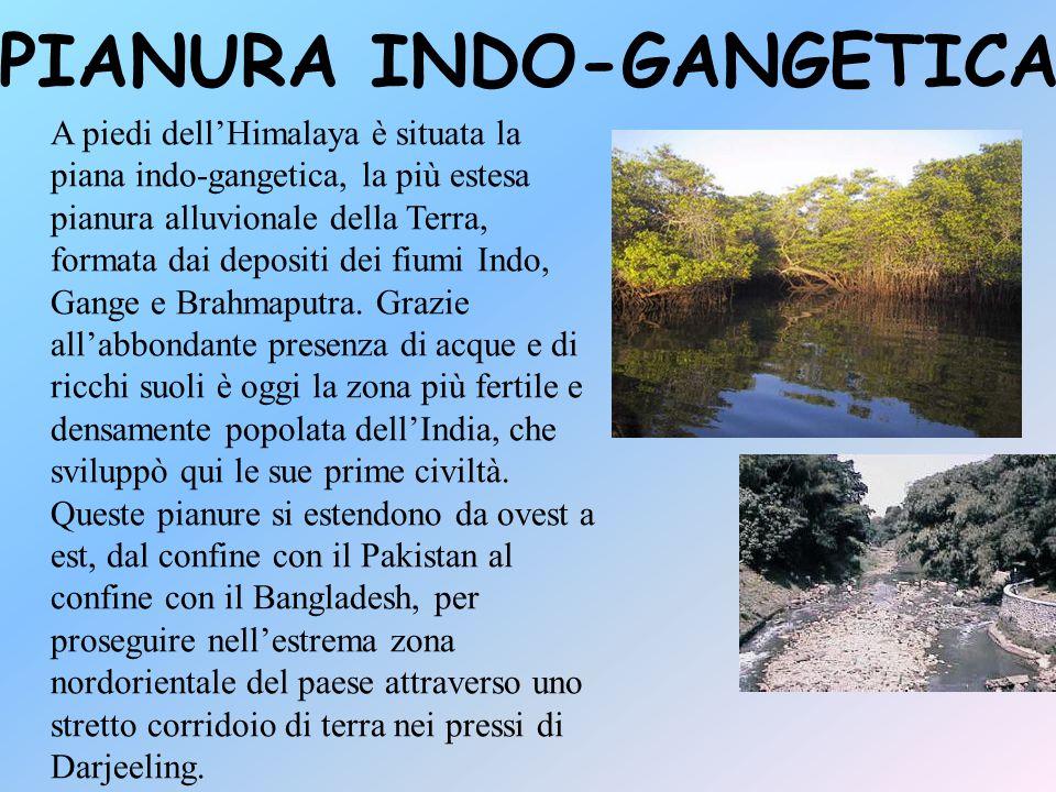 VEGETAZIONE DELLA PIANURA INDO-GANGETICA La pianura del fiume Gange, grazie alla maggior presenza d'acqua, ospita una rigogliosa vegetazione con molte specie di piante, soprattutto nella zona sud- orientale dove crescono la mangrovia e il sal (Shorea robusta).