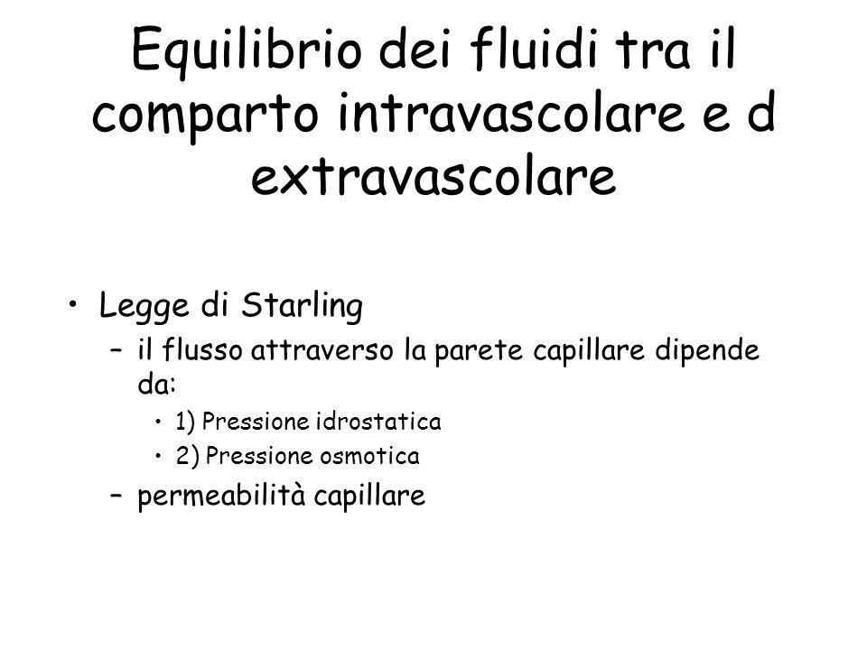 Equilibrio dei fluidi tra il comparto intravascolare e d extravascolare Legge di Starling –il flusso attraverso la parete capillare dipende da: 1) Pressione idrostatica 2) Pressione osmotica –permeabilità capillare