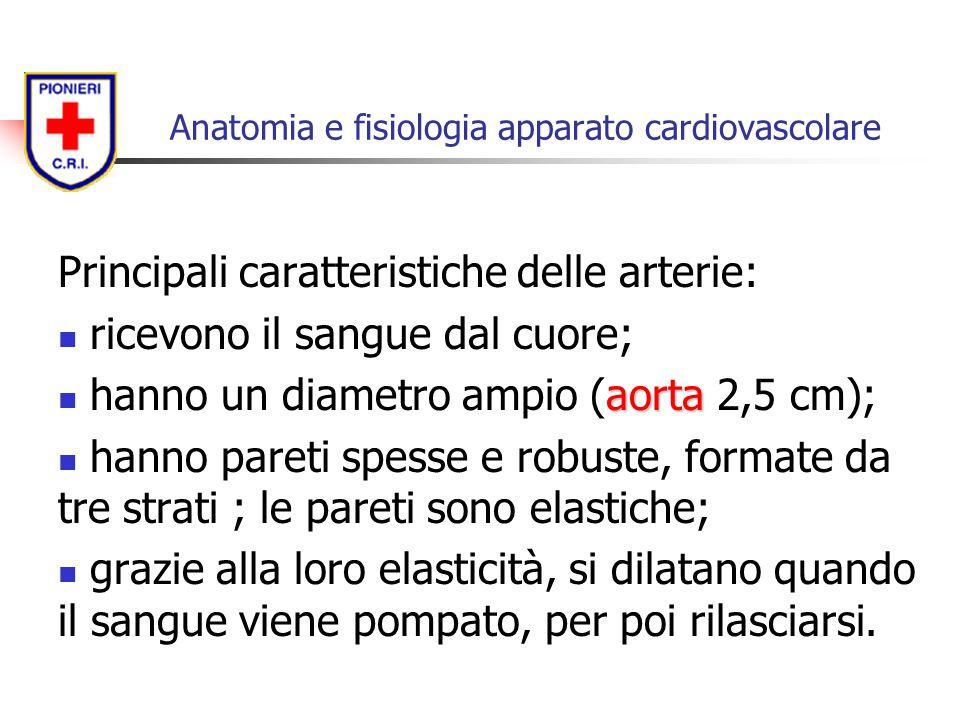 Principali caratteristiche delle arterie: ricevono il sangue dal cuore; aorta hanno un diametro ampio (aorta 2,5 cm); hanno pareti spesse e robuste, f