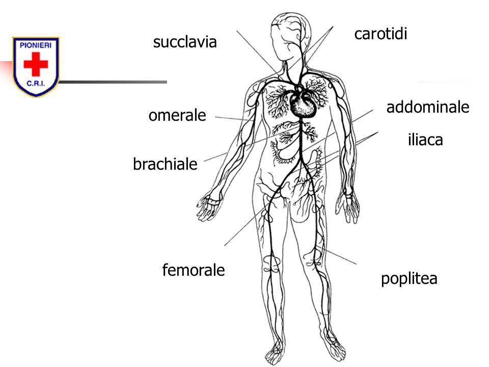 carotidi succlavia brachiale omerale poplitea femorale iliaca addominale