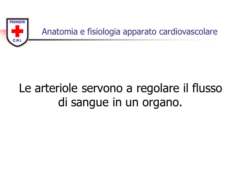 Le arteriole servono a regolare il flusso di sangue in un organo. Anatomia e fisiologia apparato cardiovascolare