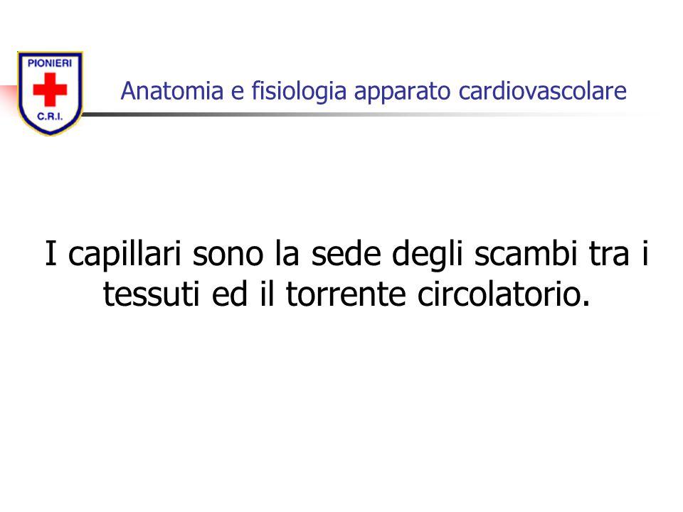 I capillari sono la sede degli scambi tra i tessuti ed il torrente circolatorio. Anatomia e fisiologia apparato cardiovascolare