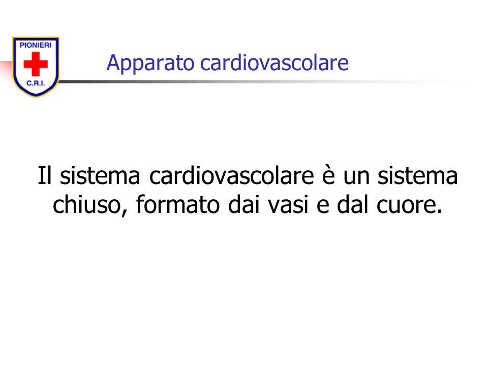 Il sistema cardiovascolare è un sistema chiuso, formato dai vasi e dal cuore.
