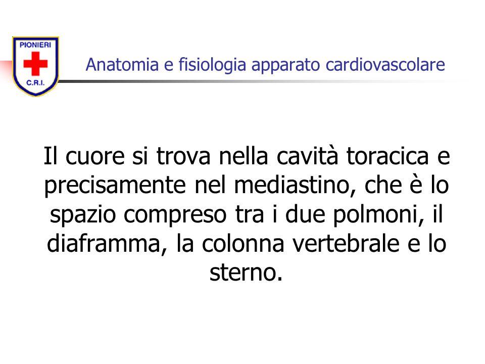Il cuore si trova nella cavità toracica e precisamente nel mediastino, che è lo spazio compreso tra i due polmoni, il diaframma, la colonna vertebrale
