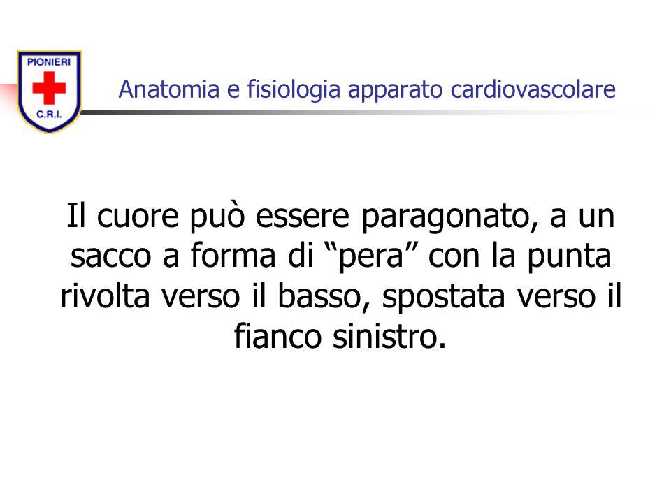 """Il cuore può essere paragonato, a un sacco a forma di """"pera"""" con la punta rivolta verso il basso, spostata verso il fianco sinistro. Anatomia e fisiol"""