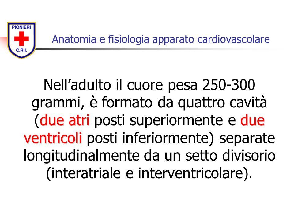 due atridue ventricoli Nell'adulto il cuore pesa 250-300 grammi, è formato da quattro cavità (due atri posti superiormente e due ventricoli posti infe
