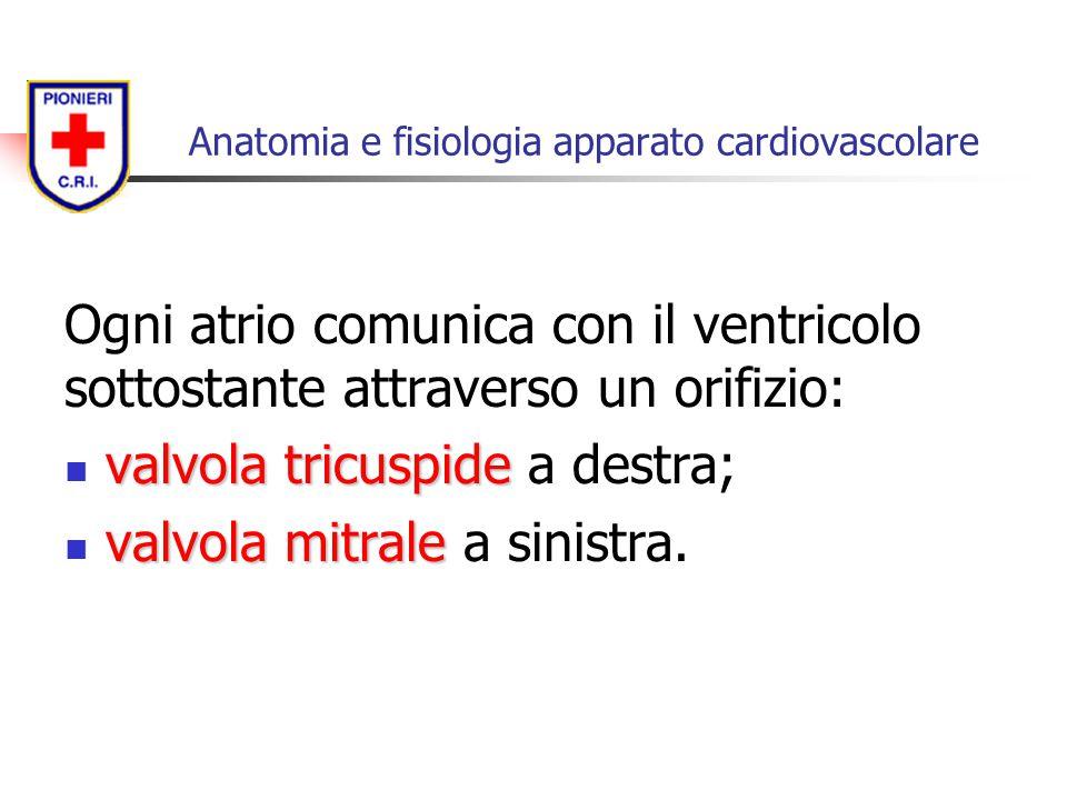 Ogni atrio comunica con il ventricolo sottostante attraverso un orifizio: valvola tricuspide valvola tricuspide a destra; valvola mitrale valvola mitr