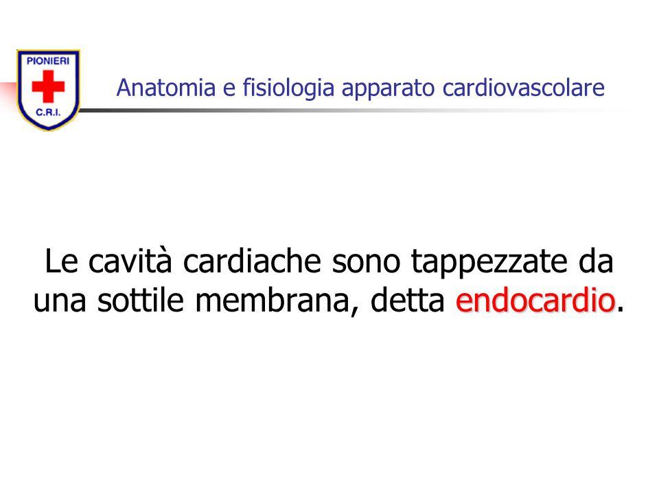 endocardio Le cavità cardiache sono tappezzate da una sottile membrana, detta endocardio. Anatomia e fisiologia apparato cardiovascolare