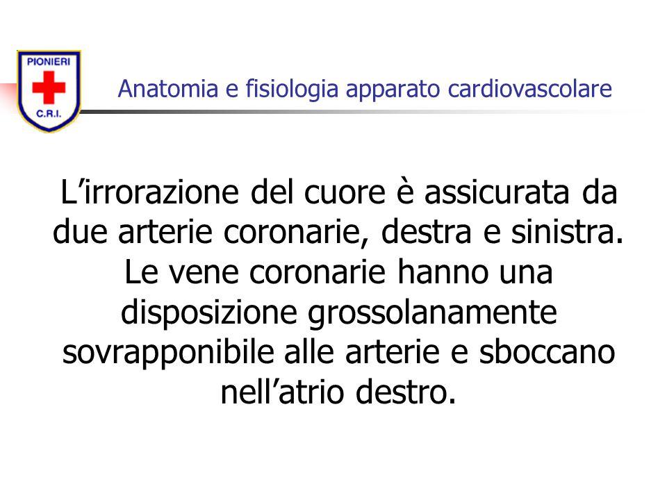 L'irrorazione del cuore è assicurata da due arterie coronarie, destra e sinistra. Le vene coronarie hanno una disposizione grossolanamente sovrapponib
