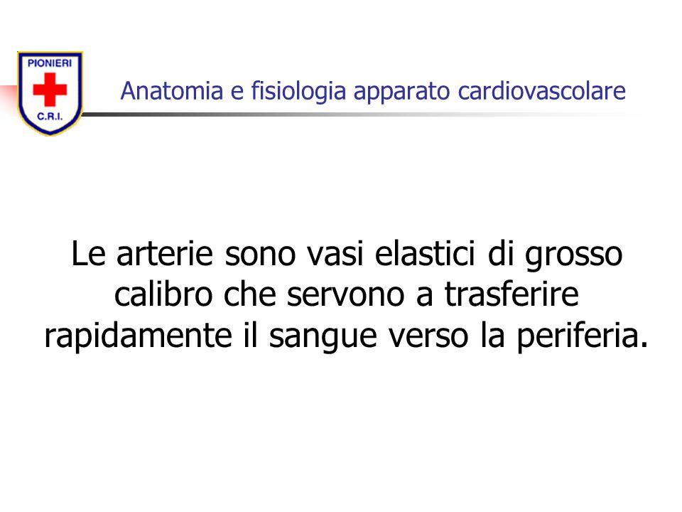Le arterie sono vasi elastici di grosso calibro che servono a trasferire rapidamente il sangue verso la periferia. Anatomia e fisiologia apparato card
