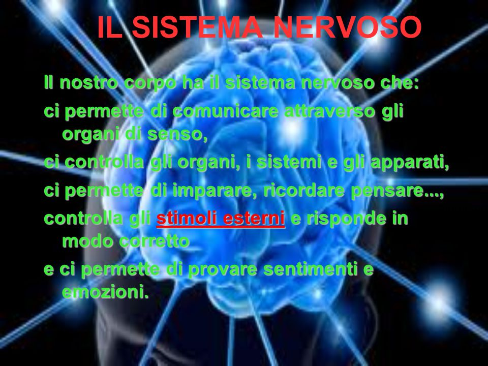 IL SISTEMA NERVOSO Il nostro corpo ha il sistema nervoso che: ci permette di comunicare attraverso gli organi di senso, ci controlla gli organi, i sis