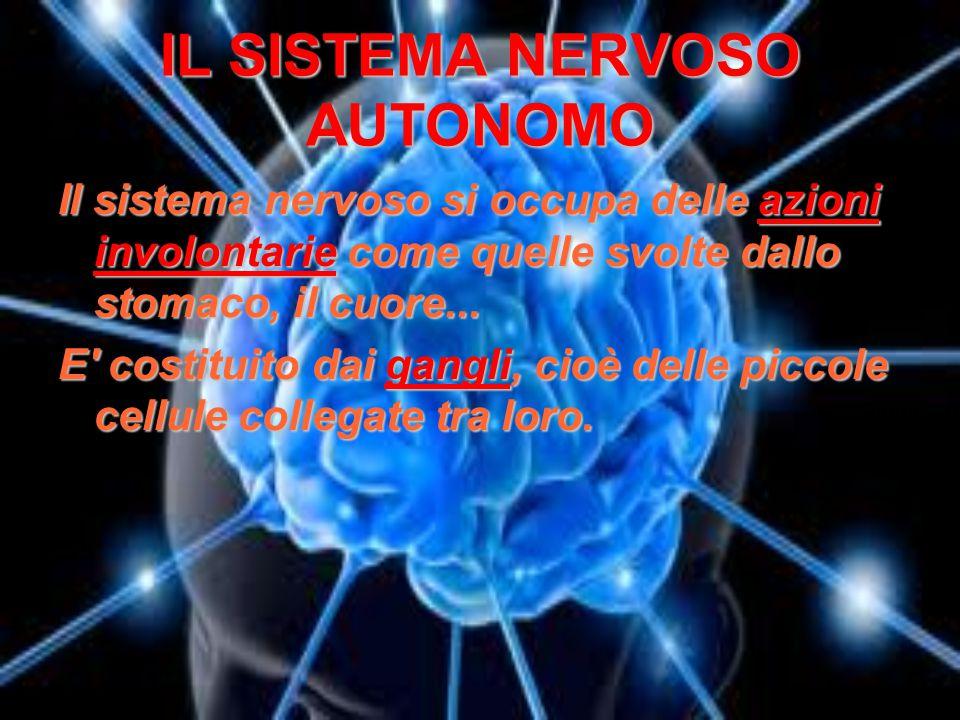 IL SISTEMA NERVOSO AUTONOMO Il sistema nervoso si occupa delle azioni involontarie come quelle svolte dallo stomaco, il cuore... E' costituito dai gan