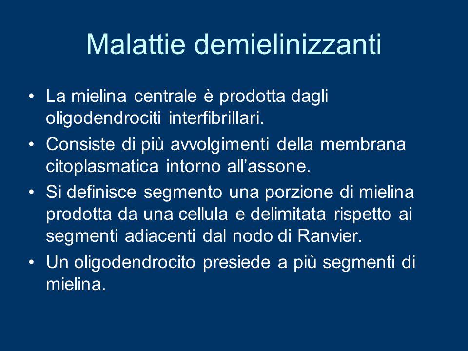 Malattie demielinizzanti La mielina centrale è prodotta dagli oligodendrociti interfibrillari. Consiste di più avvolgimenti della membrana citoplasmat