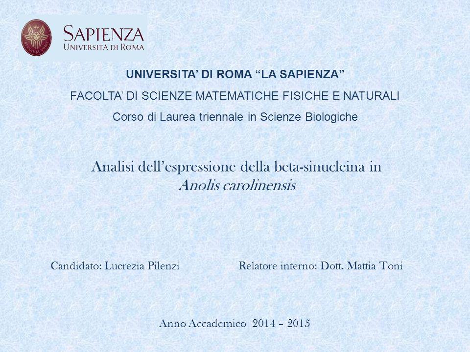 """UNIVERSITA' DI ROMA """"LA SAPIENZA"""" FACOLTA' DI SCIENZE MATEMATICHE FISICHE E NATURALI Corso di Laurea triennale in Scienze Biologiche Analisi dell'espr"""