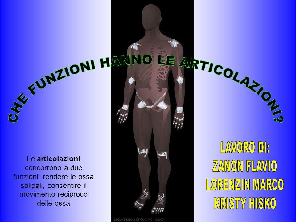 Le articolazioni concorrono a due funzioni: rendere le ossa solidali, consentire il movimento reciproco delle ossa