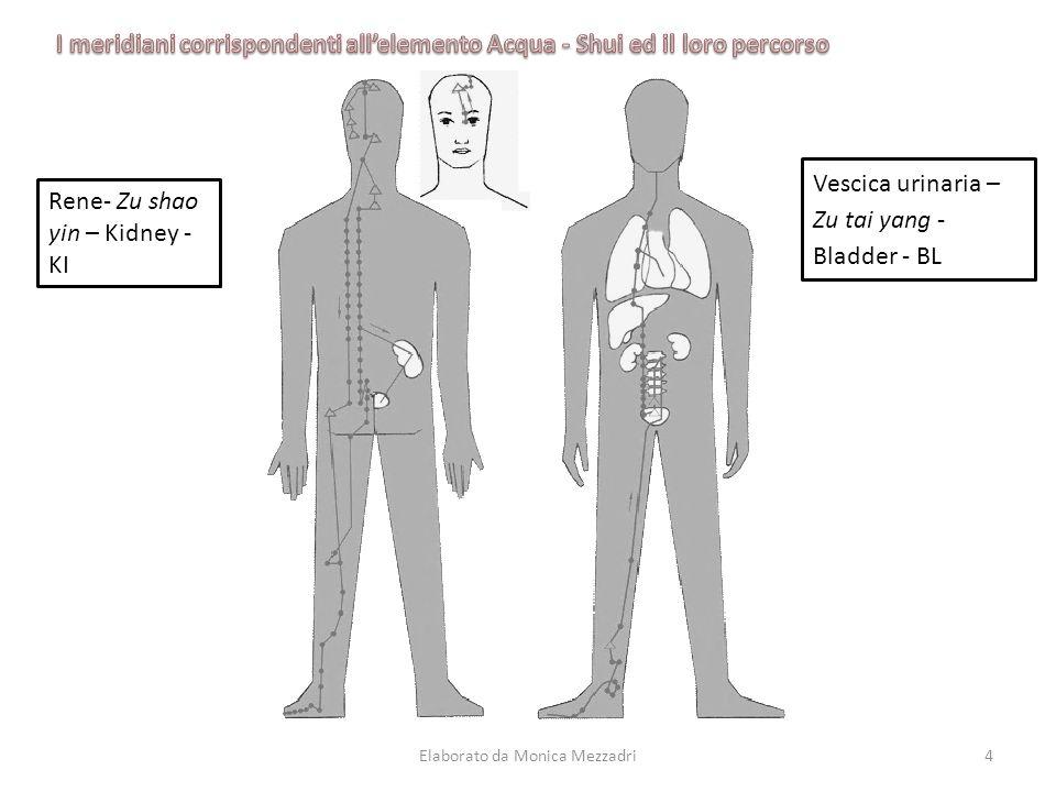 Rene- Zu shao yin – Kidney - KI Vescica urinaria – Zu tai yang - Bladder - BL Elaborato da Monica Mezzadri4