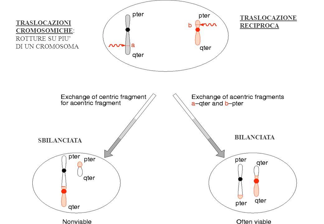 ANOMALIE CROMOSOMICHE §ANOMALIE COSTITUZIONALI: presenti in cellule di tutto il corpo.