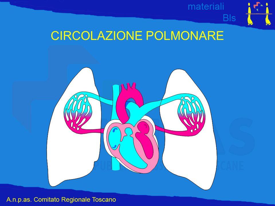 CIRCOLAZIONE POLMONARE