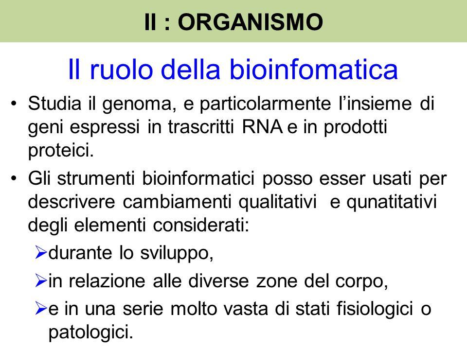Studia il genoma, e particolarmente l'insieme di geni espressi in trascritti RNA e in prodotti proteici. Gli strumenti bioinformatici posso esser usat